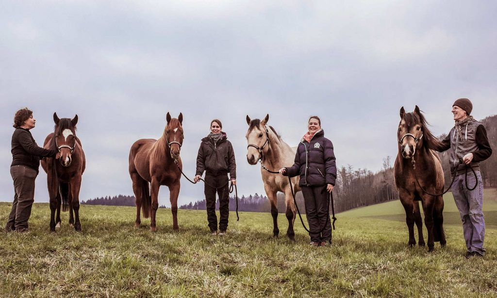 Nachzucht von Quarter Horse Zucht Hengst Dreamn Bout Chics